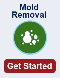 mold remediation in TN