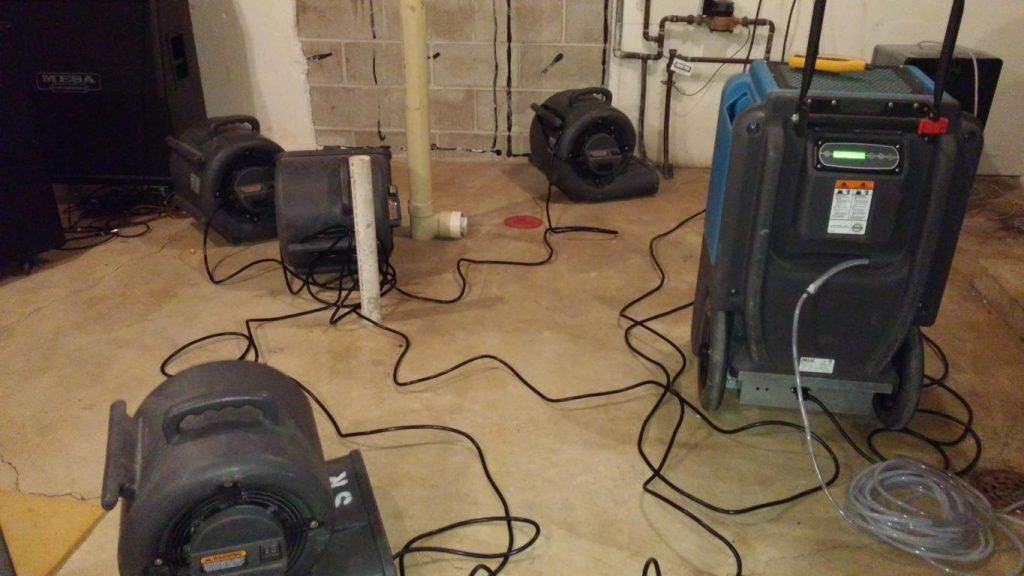 Roselle IL mold removal